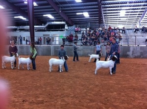 Random photo of my son winning third prize at a goat show. This IS what author blogs are for, right?